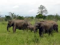 Udawalawe / Sinharaja Rainforest