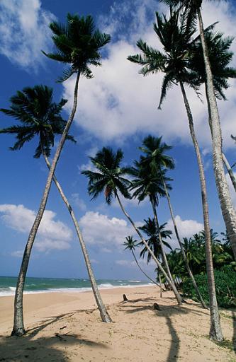 The Palms on the Beach