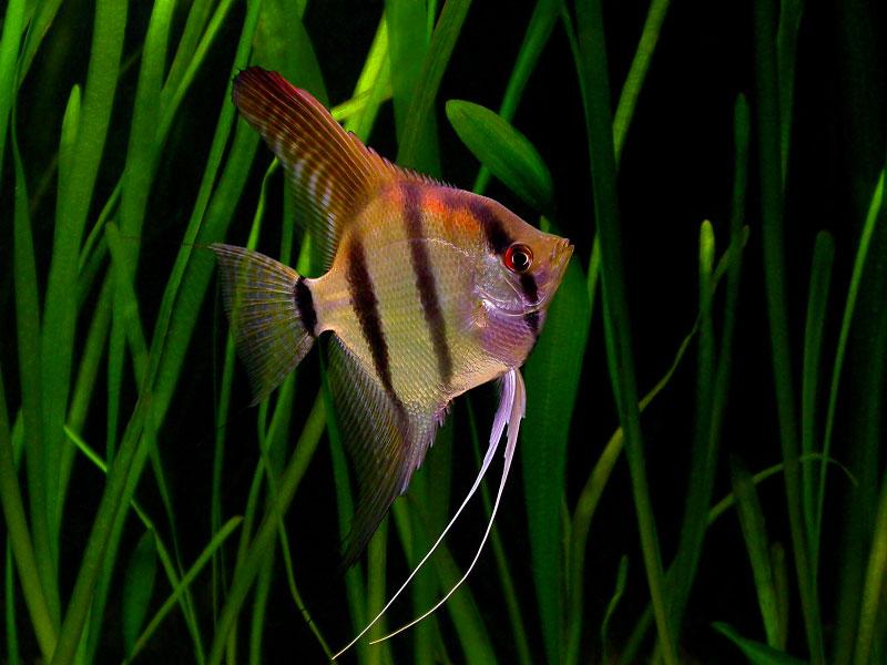 Negombo Aquarium Ornamental Fish Sri Lanka