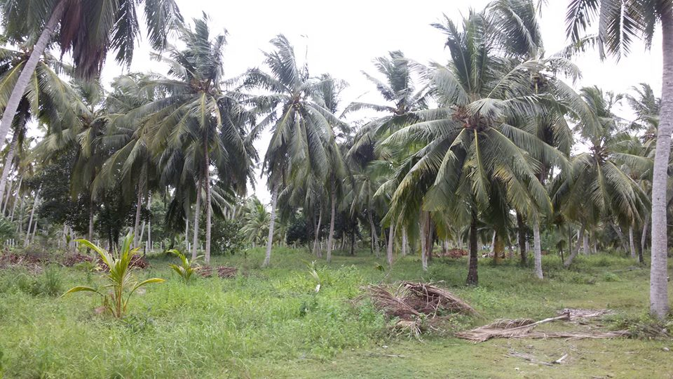 Wayamba Lands | Coconut Lands for Sale in Sri Lanka